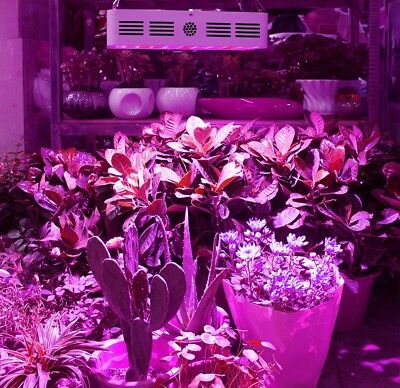 LED Grow Light 600W 1000W 1200W Plant Lamp Indoor Medical Hydroponics Bloom US