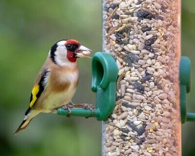 Wheat Free Wild Bird Seed Mix With Mealworms - Spring/Summer Mix Wild Bird Food