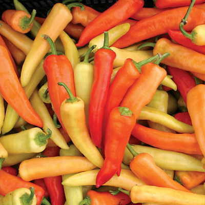 200 x seeds Sweet Hot Hungarian Wax Capsicum Chilli Pepper Not for WA or TAS