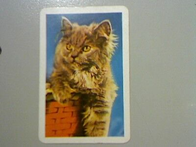 1 Swap/Playing Card - Cute Fluffy Cat in Basket
