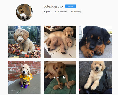 Instagram Account 1.5k to 3.2k + |Real People| Dogs + 365 Photos
