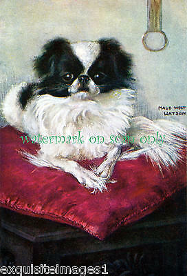 Maud West Watson~Sweet Japanese Chin Dog Sitting on Red Pillow~ NEW Note Cards