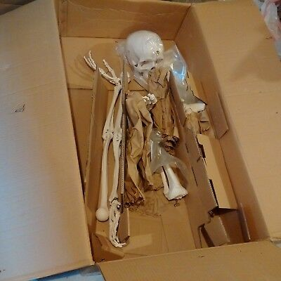 3B Scientific Adult Human Plastic Skeleton, Life-Size, Pelvic Mounted