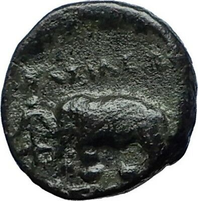 ANTIOCHOS III the GREAT - Rare R1 Ancient Greek SELEUKID Coin ELEPHANT i69822