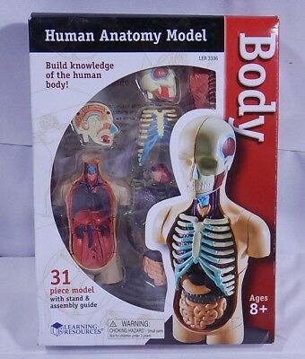 Human Body Anatomy Model EJ