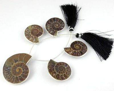 "1 Strand Natural Ammonite Fossil 925 Silver Plated 24x30-31x39mm Faceted 6"" Long"