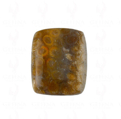 35 X 29 X 7 Mm Antique Shaped Fossil Coral Gemstone Ss1185
