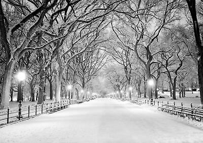 Central Park New York Black & White Winter Tree Giant Poster - A4 A3 A2 A1 Sizes