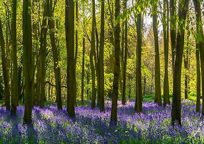 Purple Flowers Forest Trees Living Room Bedroom Giant Poster - A4 A3 A2 A1 Sizes