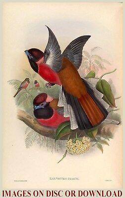 BIRDS OF ASIA - 228 Restored, High Resolution, Large Size, Printmaking Images