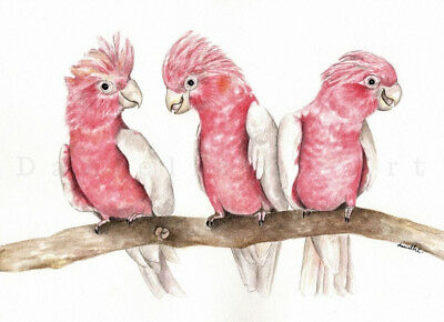 Watercolour Galah Print Australian bird art bird prints nursery artwork pink