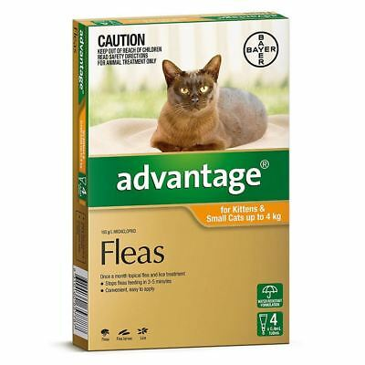 Advantage for Small Cats under 4 kg - 4 Pack