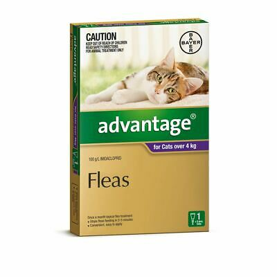 Advantage for Large Cats over 4 kg - 1 Pack