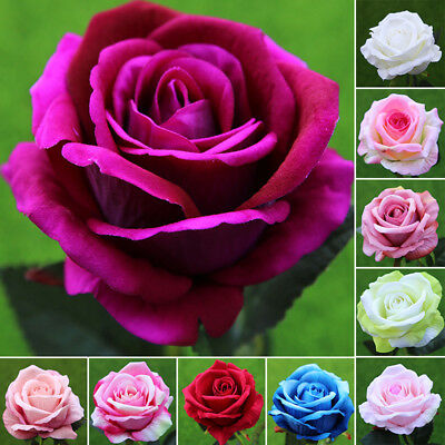 1 Pz Artificiale Rose Fiore Singolo Testa Matrimonio Sposa Bouquet Decorazioni