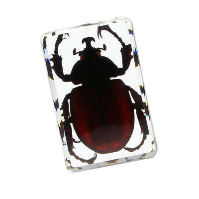 MagiDeal Rhinoceros Beetle Insect Paperweight Insect Specimen - A, 4.5x3x2cm