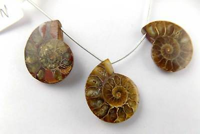 3 Pcs Natural Ammonite Snake Fossil Slices Shells Uneven 30x24-31x25mm  For Sale