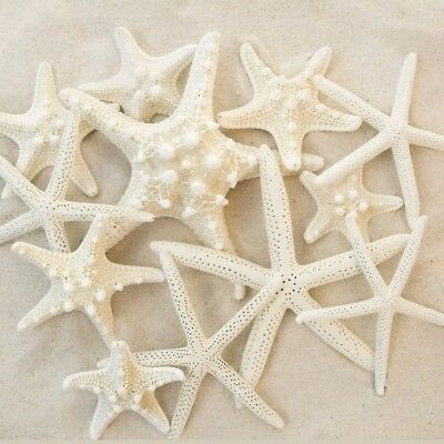 Set of 12 Mixed White Starfish – Sizes Range From 2 to 3.5 inches to 4 to 5.5