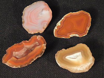 Lot of FOUR! Small Cut and Polished Banded Agate Nodules! 41.63gr e