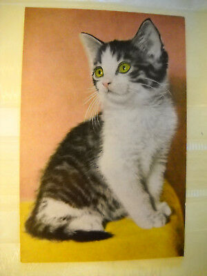 GREEN EYED KITTEN Vintage unused postcard LITHOGRAPH by ALFRED MAINZER