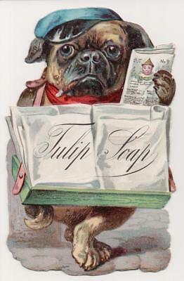 Pug Dog Selling Newspaper w/Child on it! for Tulip Soap. Die-cut Trade Card