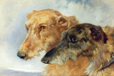 1851Scottish Deerhound Puppy Dog Dogs~Head Profiles~ NEW Large Note Cards