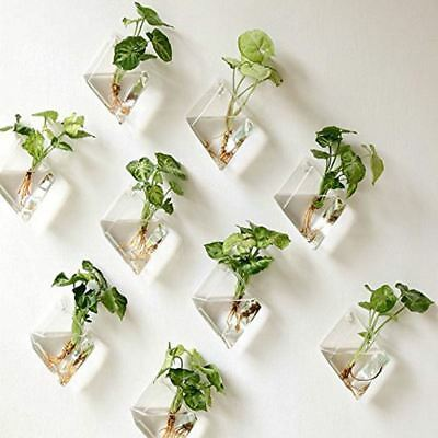 2Pcs Wall Hanging Plant Glass vase Wall Planter Clear Glass Flower Holder
