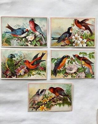 Antique Victorian trade card lot birds and flowers nice condition