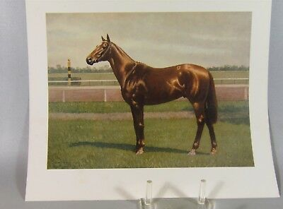 man o' war race horse print by C.W. Anderson 1970 (new old stock)