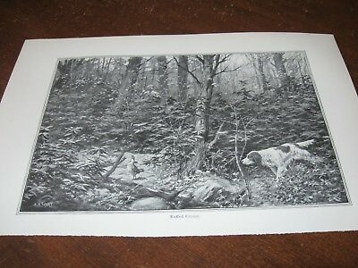 1897 Art Print - A B FROST of RUFFED GROUSE HUNTING Dog Dogs SPANIEL SETTER Hunt