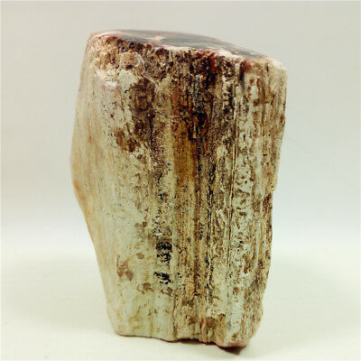 "1.8""220g PETRIFIED WOOD Branch Limb FOSSIL AGATE DISPLAY Stand Madagascar Y956"