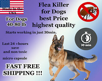 100 Capsules Instant Flea Killer Control Large Dogs 40-80lb +Soap Shampoo Sample