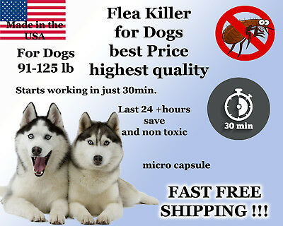 100 Capsules Instant Flea Killer Control Large Dogs 81-125lb Soap Shampoo Sample