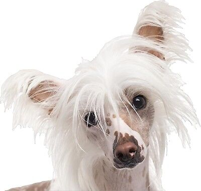 Chinese Crested Dog  Vinyl  Peeker Decal  Sticker For Car Window
