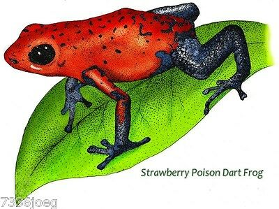 Poison Dart Frogs Colorful  Images on Custom Tee shirt  Strawberry Yellow Banded