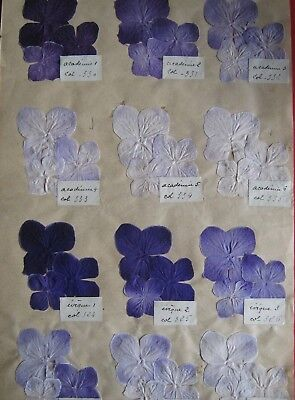 Vintage Cloth Flower Colour  Fabric Sample -From A Shop In Bath 1939-Lot F