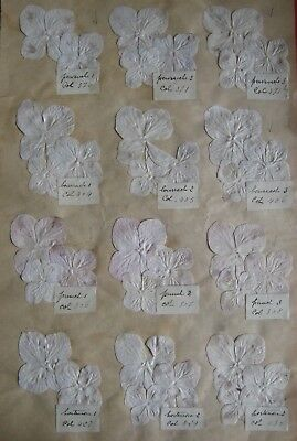 Vintage Cloth Flower Colour  Fabric Sample -From A Shop In Bath 1939-Lot I