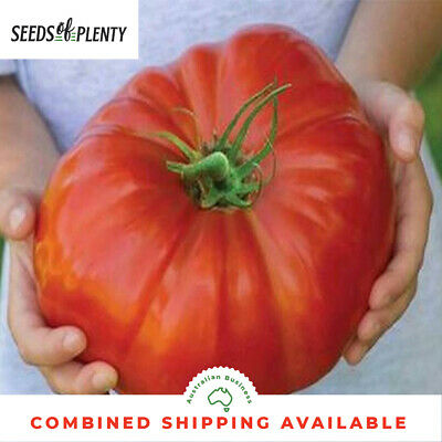 TOMATO - Beefsteak (75 Seeds) GIANT FRUIT Heirloom BULK Huge