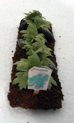 "Dollhouse miniatures 1:12 vegetable garden row, Cucumbersr. 4"" x 1"""