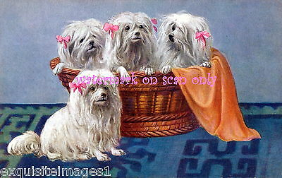 Antique Art~Group of Maltese Dogs with Pink Bows~NEW Large Note Cards