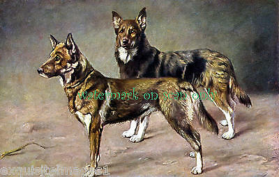 Vintage Art~ Two Black & Tan German Shepherd Dogs in Stance~NEW Large Note Cards