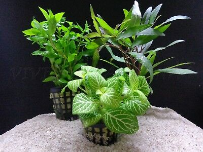 Plante Pour Aquarium; Lot De 15 Plantes En Raison De