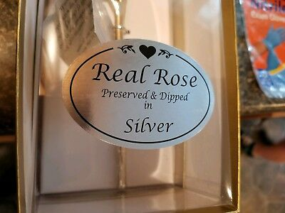 Real Rose Dipped In Silver