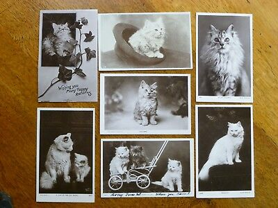 Cute cats & kittens - 7 vintage postcards, 1907, Rotary & Rapid Photo