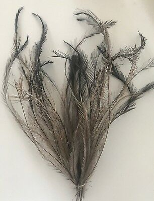 Natural Emu Tail Feathers - 25 feathers - extra long 24-35cm