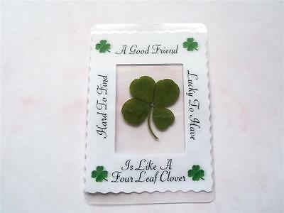 real four leaf clover,  goodluck gift, keepsake, lucky clover,genuine 4 leaf