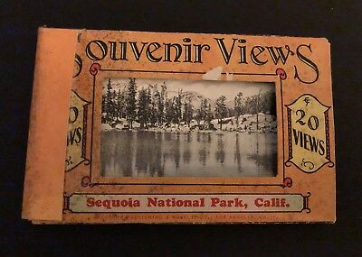 Vintage Sequoia National Park California Souvenir Photo Cards Black & White (20)