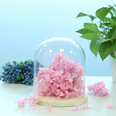 Glass Cloche Bell Jar Plant Flower Display Dome with Wooden Base