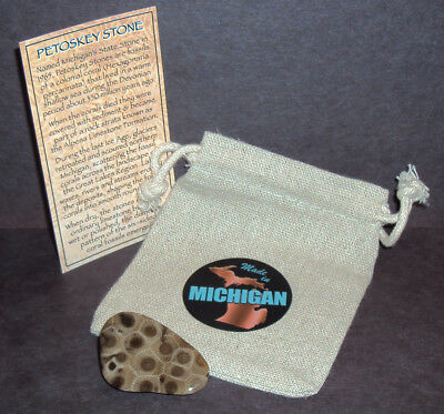 Michigan Petoskey Stone Cut, Polished, Coated! 350 Million Year Old Coral Fossil