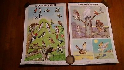 2 Vintage School Educational Charts Copyright 1951 Pennsylvania Game Commission