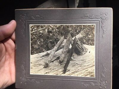 Antique Cabinet Card Photo Artistic Wood Pile Beavers Work Houghton Michigan